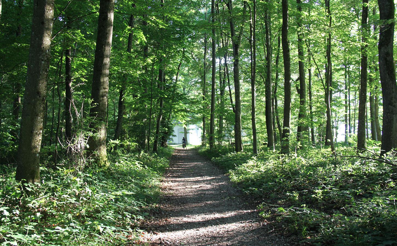 Erlach Ile de Saint-Pierre randonnée